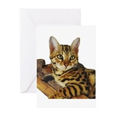 Bengal Kitten (2) Greeting Card