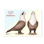 Shakhsharli Pigeon Standard Postcards (Package of