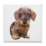 Wire Haired Red Dachshund Tile Coaster