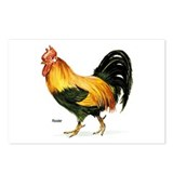 Rooster Chicken Postcards (Package of 8)