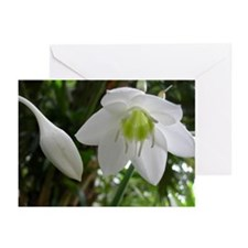 Amazon Lily Greeting Cards (Pk of 10)