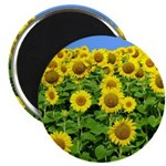 "Sunflower Cluster 2.25"" Magnet (10 pack)"