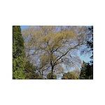 Tree Rectangle Magnet