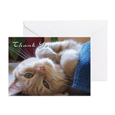 Cat Thank You Greeting Cards (Pk of 20)