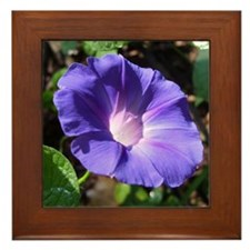 Morning Glory Framed Tile