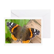 Red Admiral Butterfly Greeting Cards (Pk of 20)