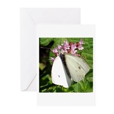 Cabbage White Butterfly Greeting Cards (Pk of 20)