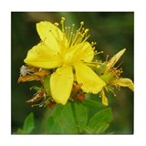 St. Johnswort Tile Coaster