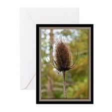 Thorny Greeting Cards (Pk of 10)