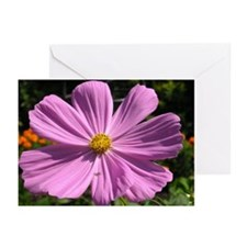 Cosmos Greeting Cards (Pk of 20)