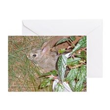 Baby Bunny Greeting Cards (Pk of 10)