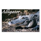Alligator Rectangle Decal