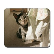 Cool Cat with an attitude Mousepad