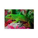Gecko Lizard Rectangle Magnet