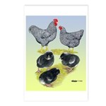 Plymouth Rock Rooster, Hen & Postcards (Package o