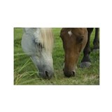 Unique Two horses Rectangle Magnet (10 pack)