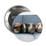 guinea pig 2.25&quot; Button (10 pack)