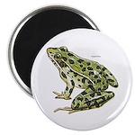Leopard Frog Magnet