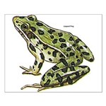 Leopard Frog Small Poster
