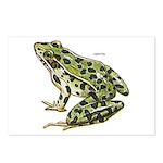 Leopard Frog Postcards (Package of 8)