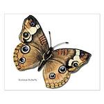 Buckeye Butterfly Small Poster