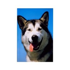 Happy Husky Rectangle Magnet (100 pack)