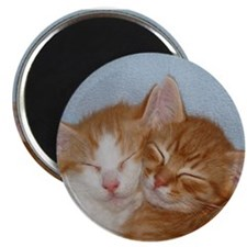 Kitten Friends Magnet