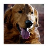 Golden Retriever Tile Coaster
