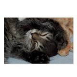 Sleepy Kitty Postcards (Package of 8)