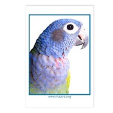 Blue-Headed Pionus - Postcards (8)