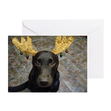 Chocolate Lab Chip Greeting Cards (Pk of 20)