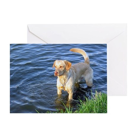 Yellow Lab Madison Greeting Card