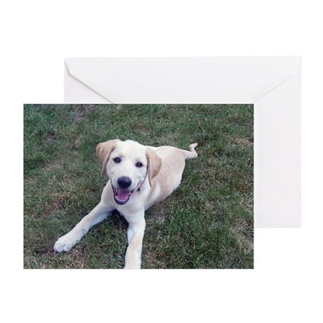 Dec Lab of the Month Greeting Cards (Pk of 20)