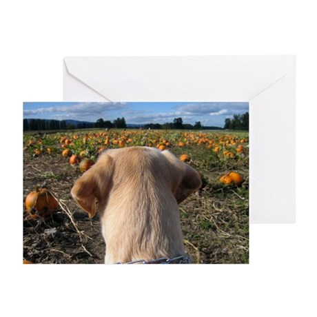 Nov Lab of the Month Greeting Cards (Pk of 20)