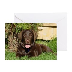 Warm Choc Labrador Greeting Card