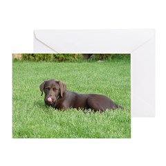 Chocolate Lab Tongue Greeting Card