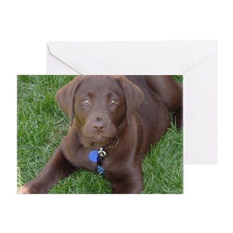 Chocolate Lab Grass Greeting Card
