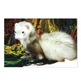 Cute Adorable ferret Postcards (Package of 8)