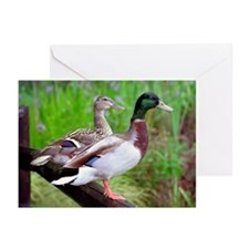 2 Mallards On a Fence Greeting Cards (Pk of 20)