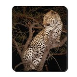 Leopard in Tree Mousepad