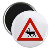 Caution Reindeers, Norway Magnet
