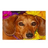 Doxie Flower Postcards (Package of 8)