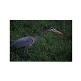 Great Blue Heron Rectangle Magnet (100 pack)