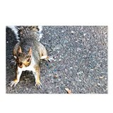 Squirrel Postcards (Package of 8)