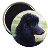 Standard Poodle Magnet