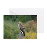 Red Tail Hawk Photograph Greeting Cards (Pk of 10)