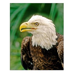 Bald Eagle Bird Small Poster