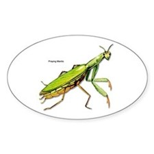 Praying Mantis Insect Oval Decal