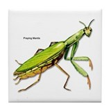 Praying Mantis Insect Tile Coaster