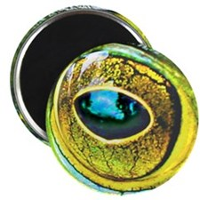 "Frog Eye 2.25"" Magnet (10 pack)"